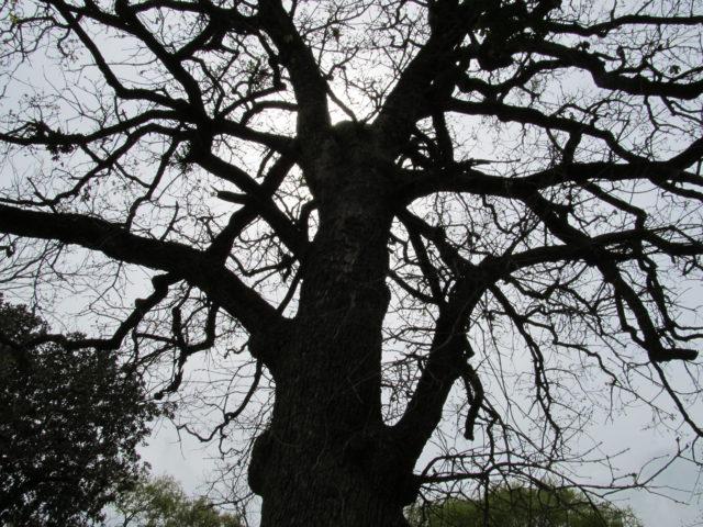 Trees surrounding Hearne